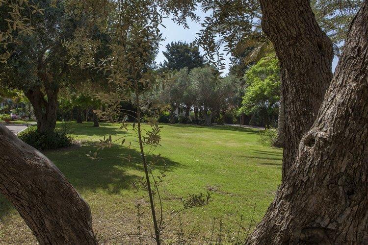 מרחבי דשא עצומים